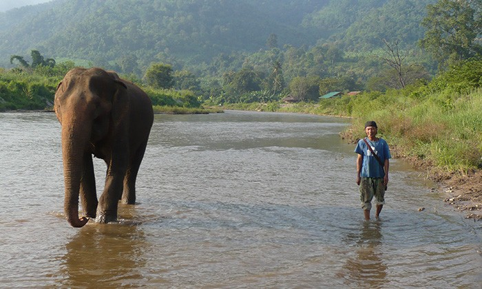 ThailandElephants7